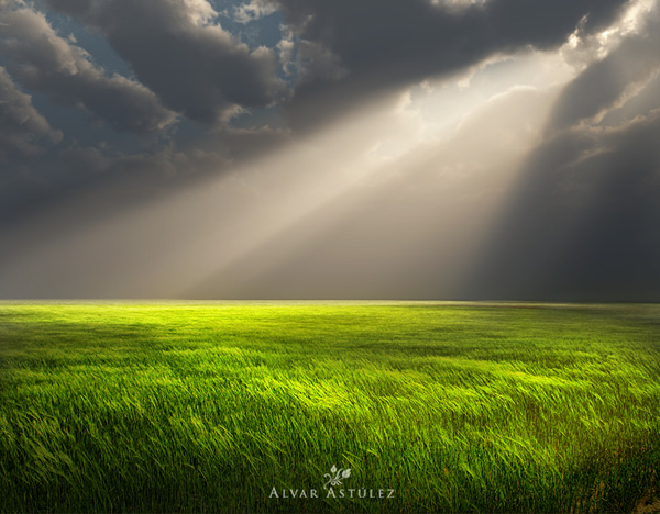 Feel the Green – Gorgeous Examples of Color Green in Photography