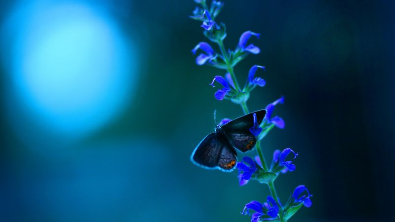 Butterfly, flowers, blue (horizontal)