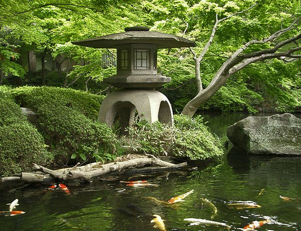 Use-of-colored-carp-and-gold-fish-in-the-koi-ponds-along-with-stone-lantern